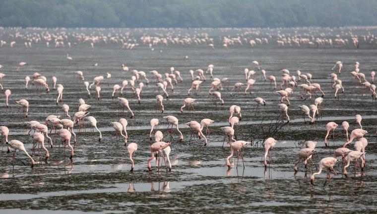 Image: Migratory birds in India