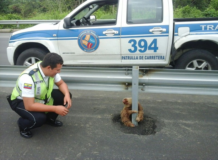 Image: A transit police officer kneels next to a sloth holding on to the post of a traffic barrier on a highway