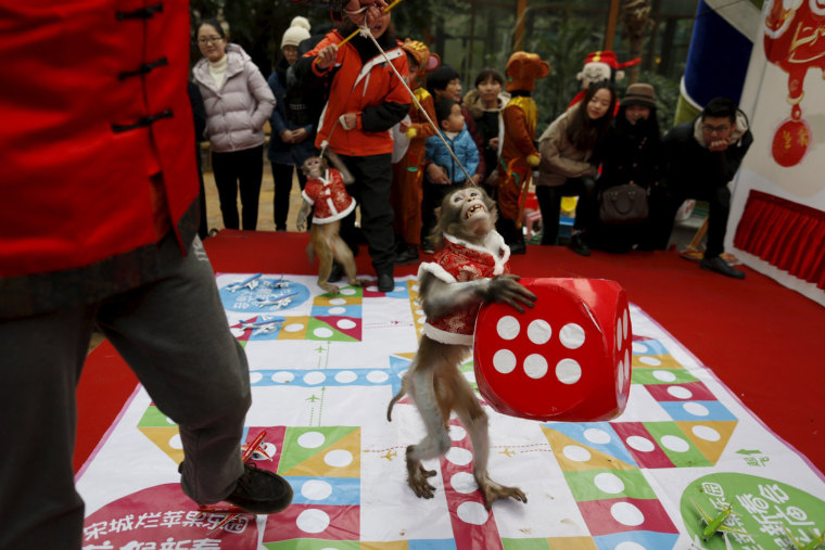 Image: A monkey holds a dice during a performance