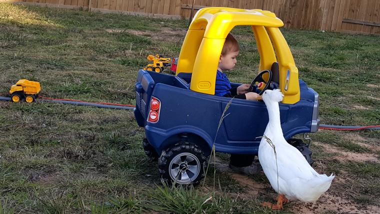 baby-boy-duck-friend-005-today-160126