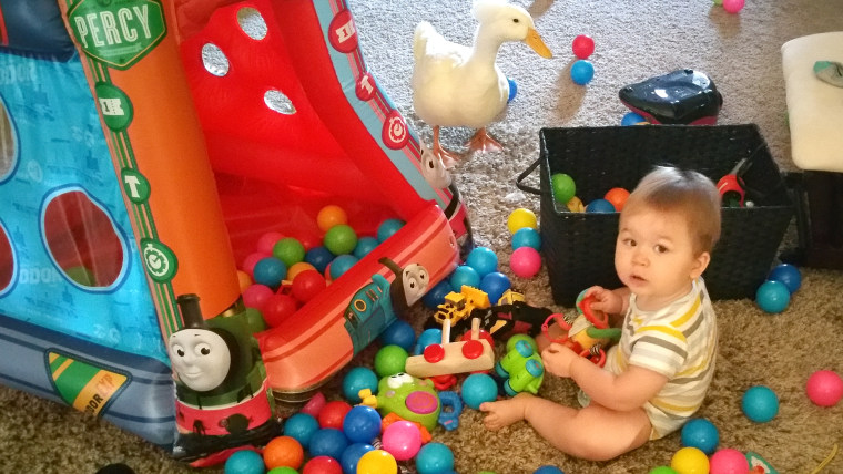 baby-boy-duck-friend-002-today-160126