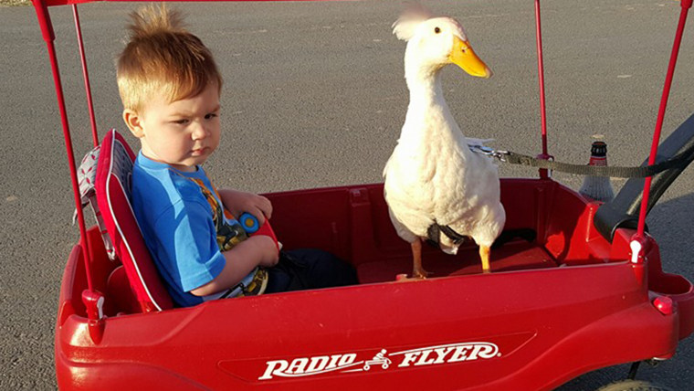 baby-boy-duck-friend-009-today-160126