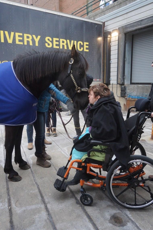 horse visit