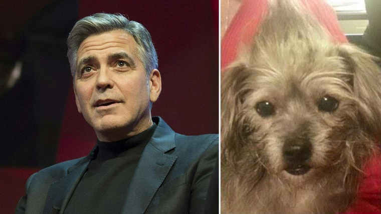 George Clooney and Nate the dog
