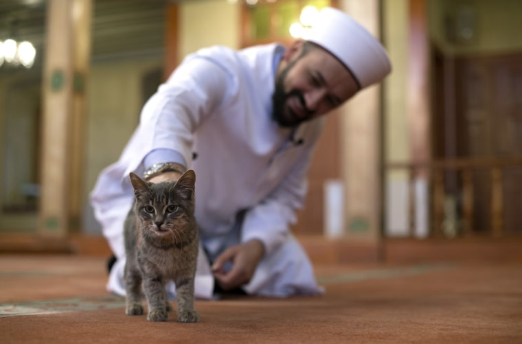 Image: Imam opens the door of Mosque for cats