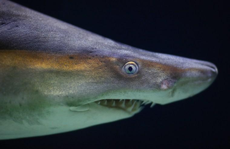 Image: Marine species threatened with extinction