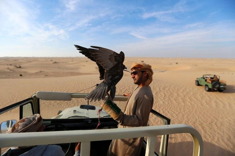 Image: UAE-FALCONRY-ANIMALS