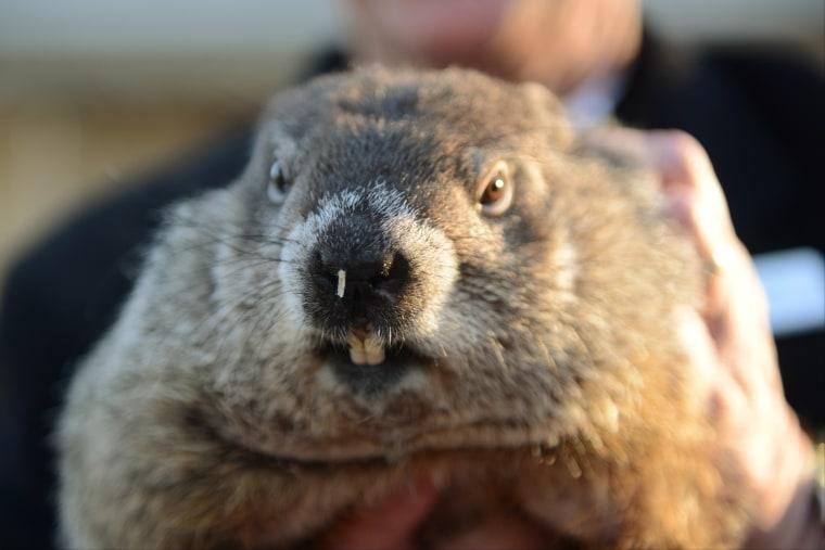 Image: Groundhog Punxsutawney Phil