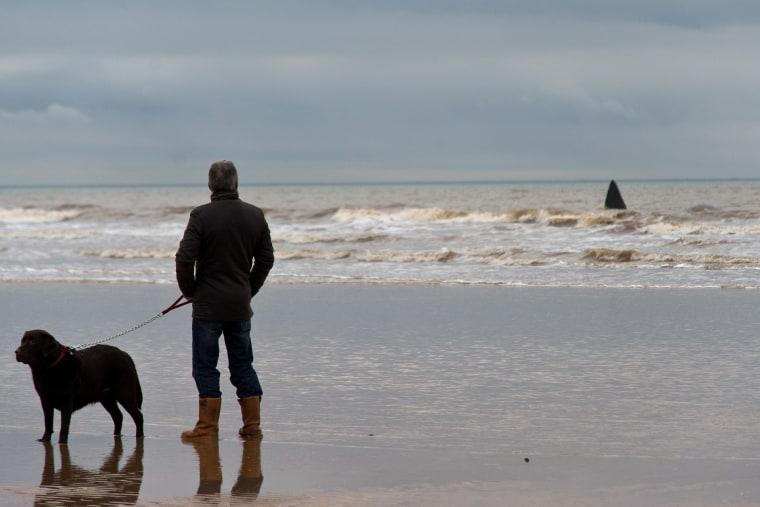 Image: Sperm Whale Beaches At Hunstanton