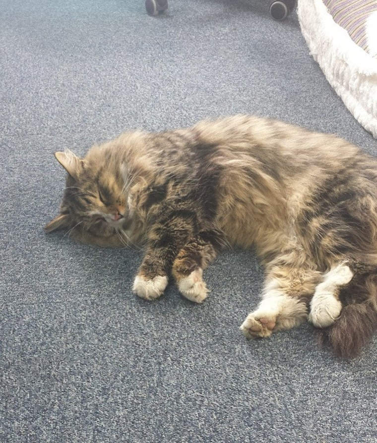 Clive the Cat, Missing for a Year, Found Fat and Happy — in Pet Food Warehouse