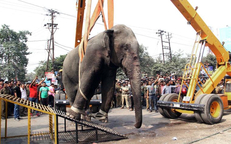 Image: wild elephant strayed in Siliguri, India