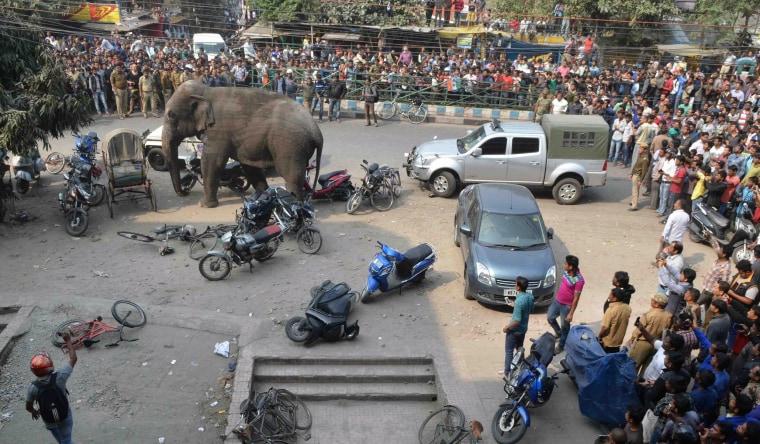 Image: INDIA-WILDLIFE-ELEPHANT-RAMPAGE