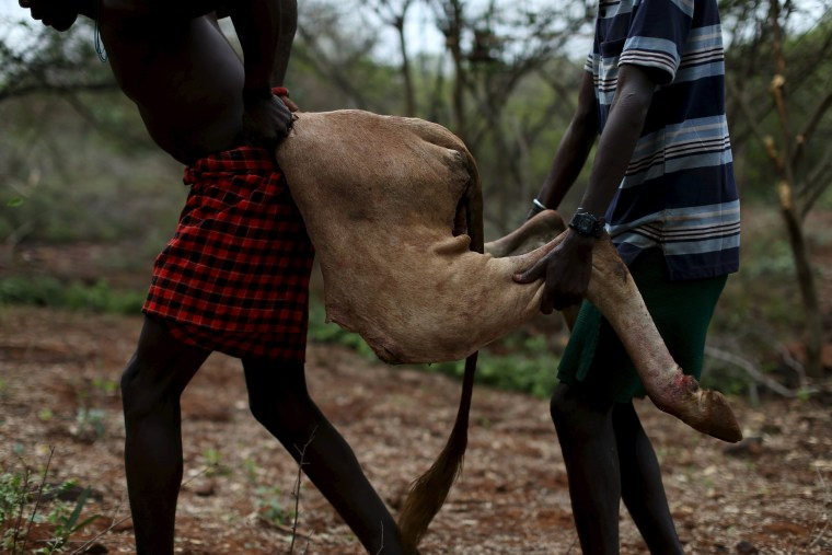 Image: Men carry a part of a carcass of a bull killed by a young man