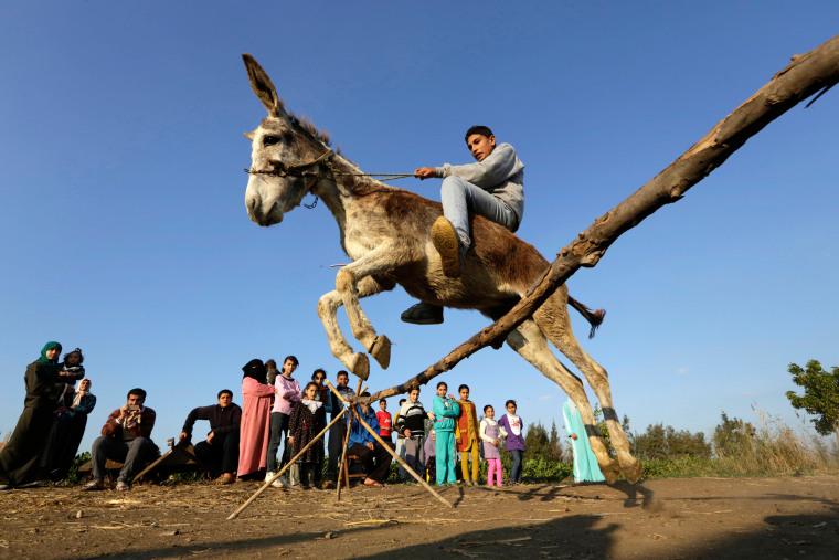 Image: Egyptian Donkey Jumping 01