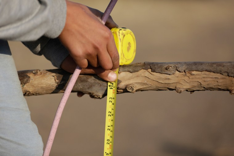 Image: Egyptian Donkey Junping Pole