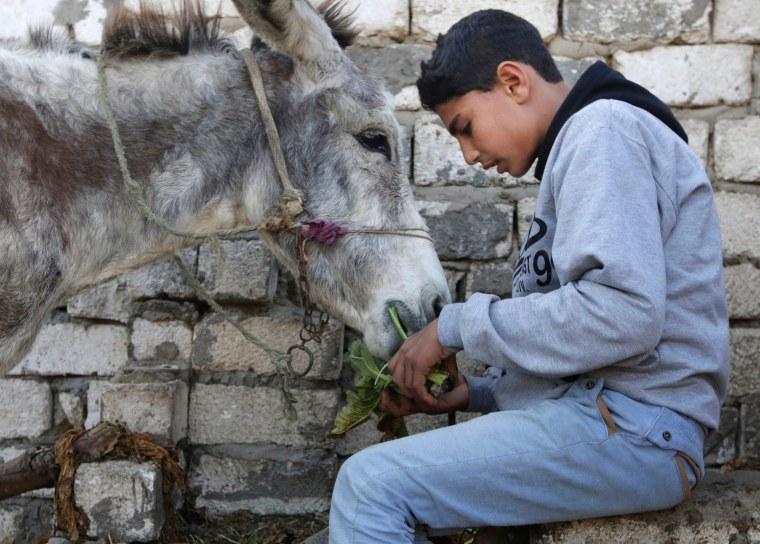 Image: Egyptian Donkey Feeding