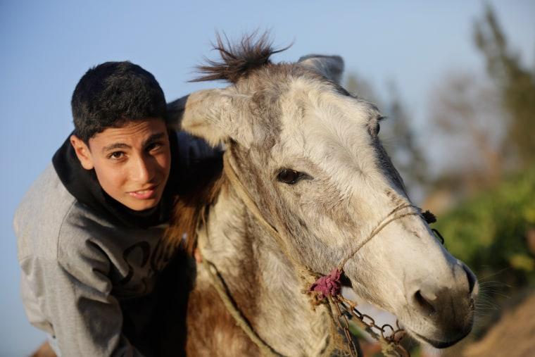 Image: Egyptian Donkey Training