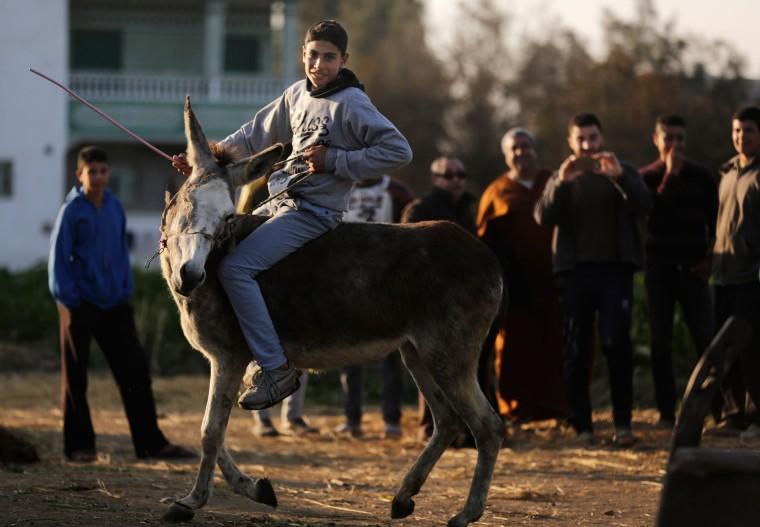 Image: Egyptian Donkey
