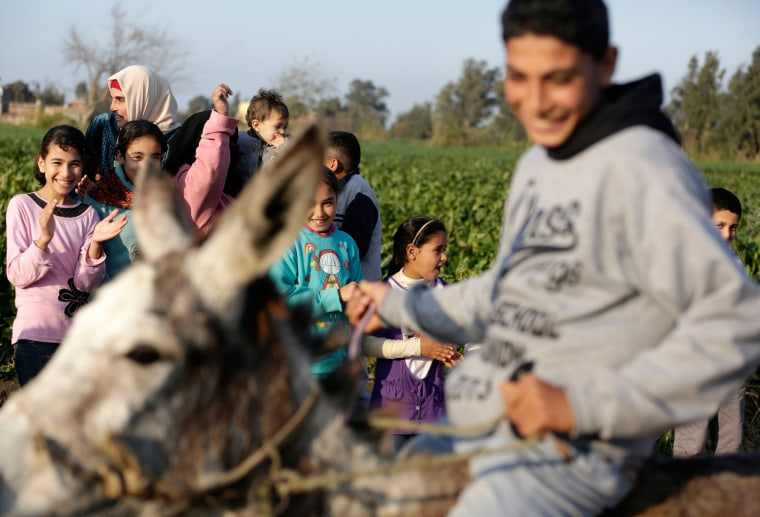 Image: Donkey Jumping Crowd