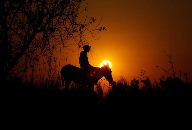 Image: Egyptian Donkey Sunset