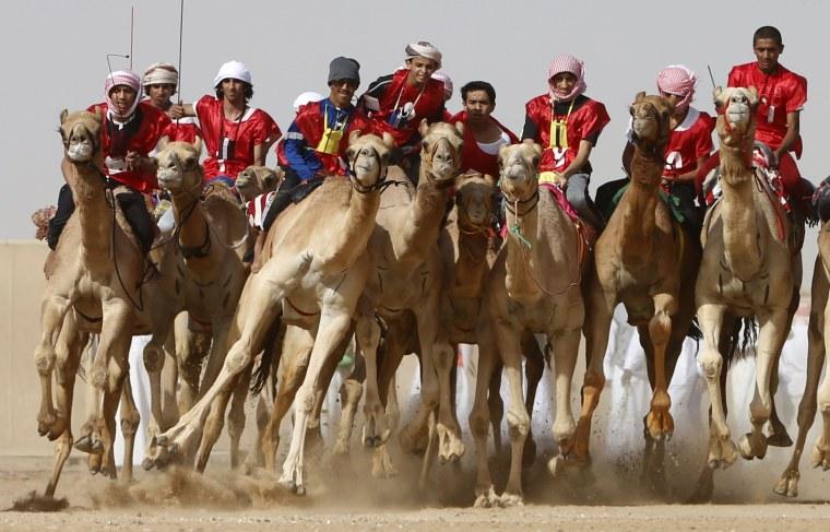Image: camel race