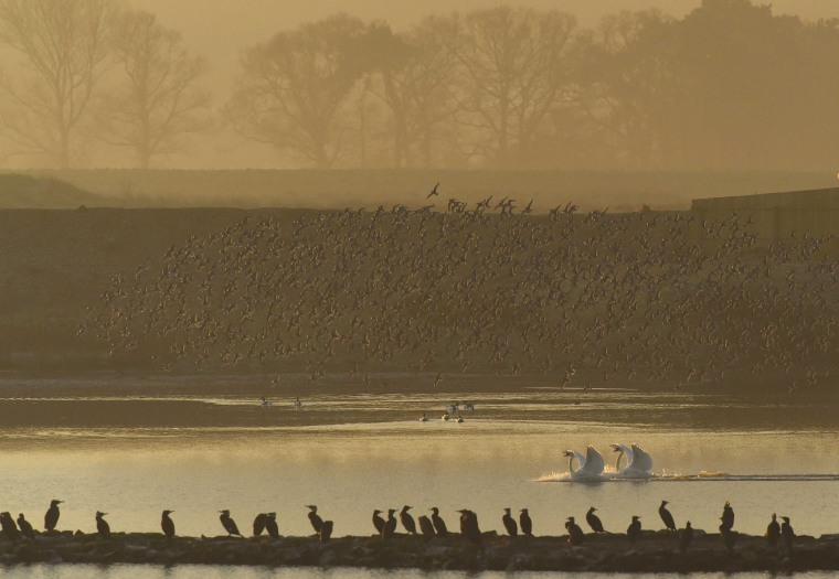 Image: Murmurations of wading birds
