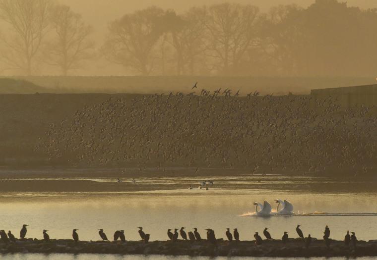 Image: Murmurations of wading birds