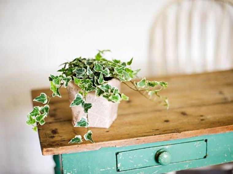 English ivy, indoor plants, houseplants, the best indoor plants
