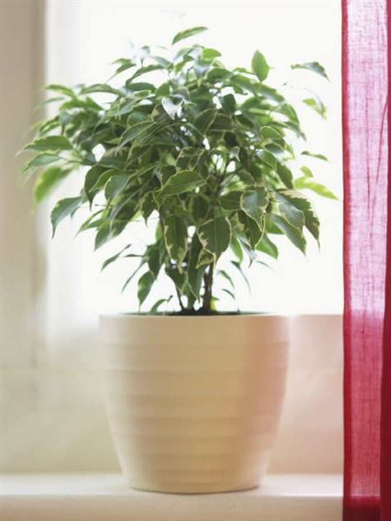 These best and easiest indoor houseplants (that won\'t die on you)