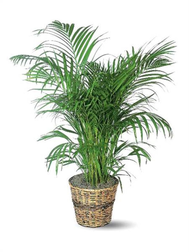 The best and easiest indoor houseplants that won\'t die on you