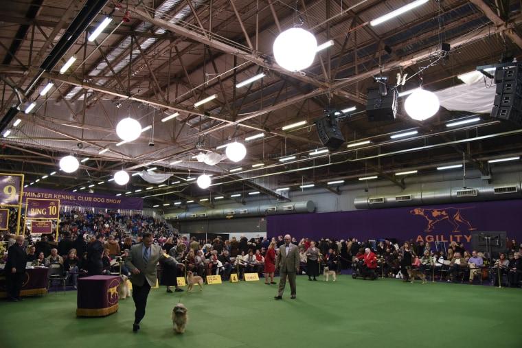 Image: US Westminster Dog Show 16