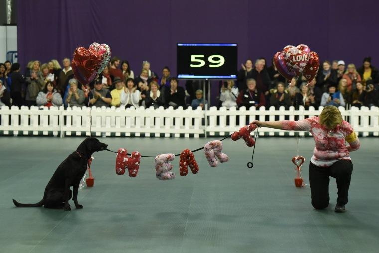 Image: US Westminster Dog Show 18