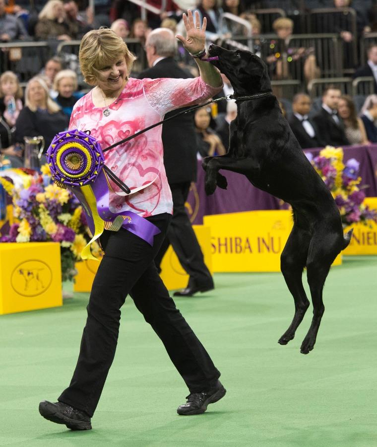 Image: US Westminster Dog Show 22