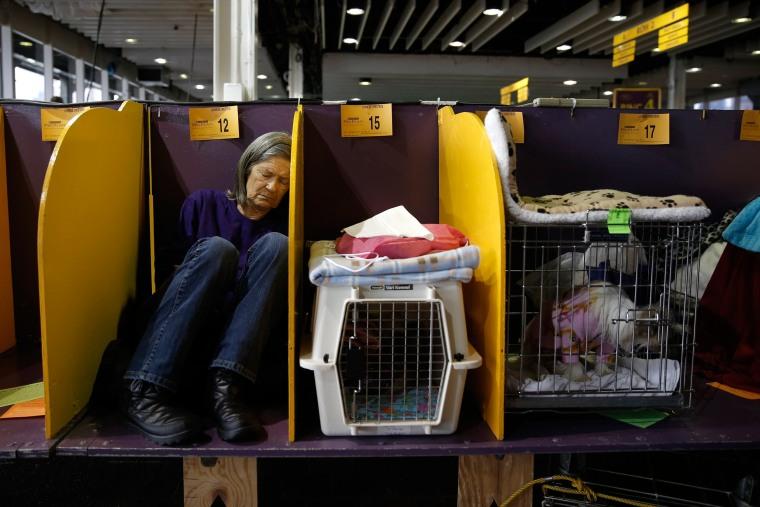Image: US Westminster Dog Show 02