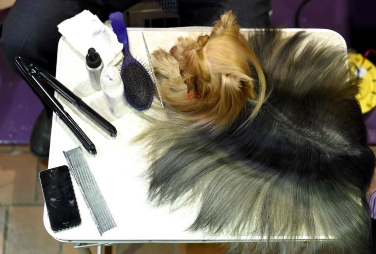 Image: US Westminster Dog Show 03