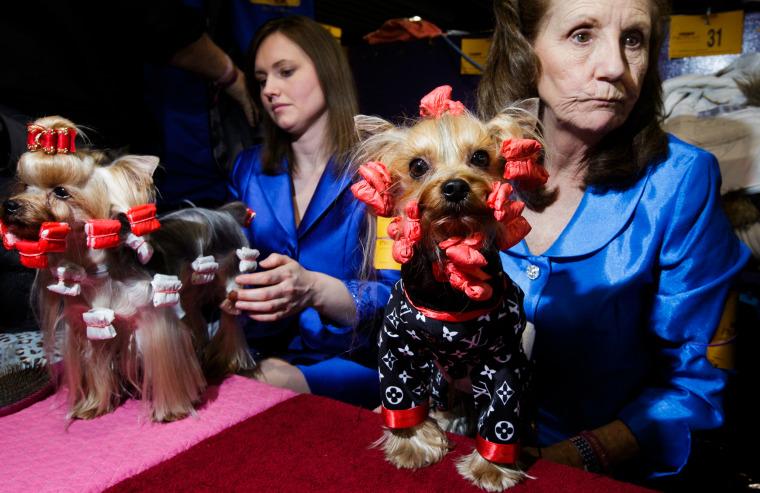 Image: US Westminster Dog Show 06