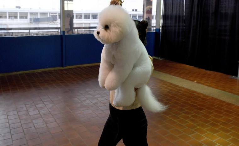 Image: US Westminster Dog Show 13