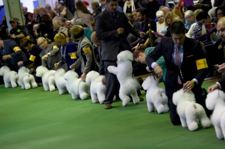 Image: US Westminster Dog Show 14