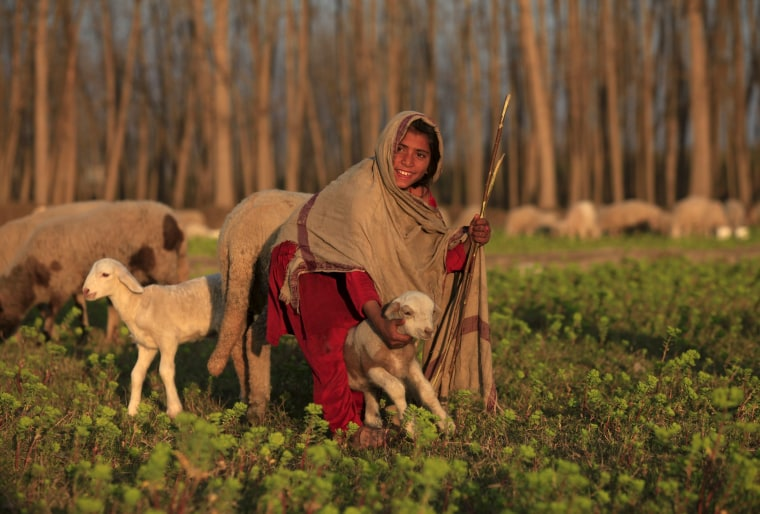 Image: A girl reacts while holding a sheep at a field in Nowshera, Pakistan