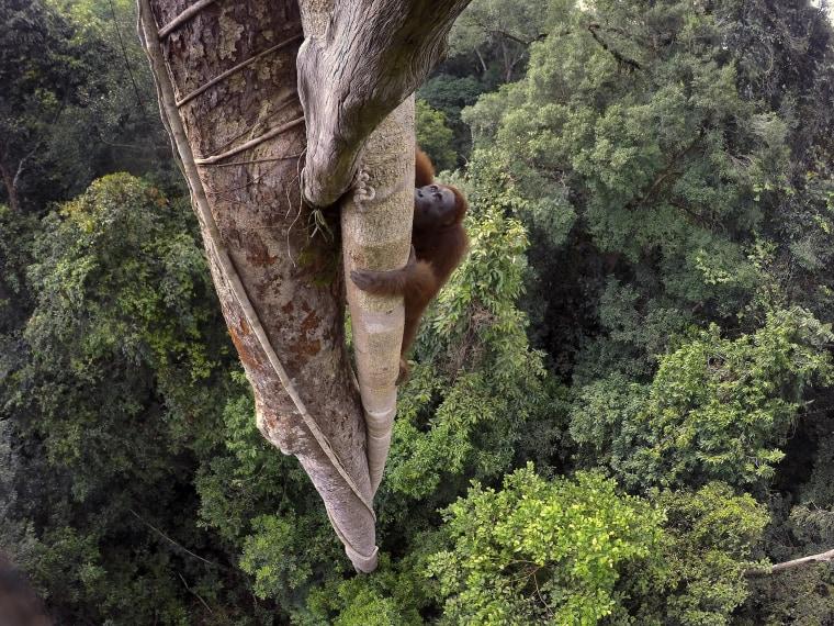 Image: Nature, 1st prize stories - 2016 World Press Photo