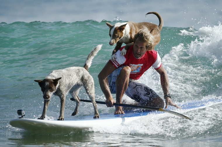Image: surf dogs