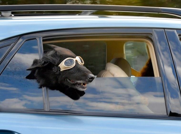 Image: Doggles
