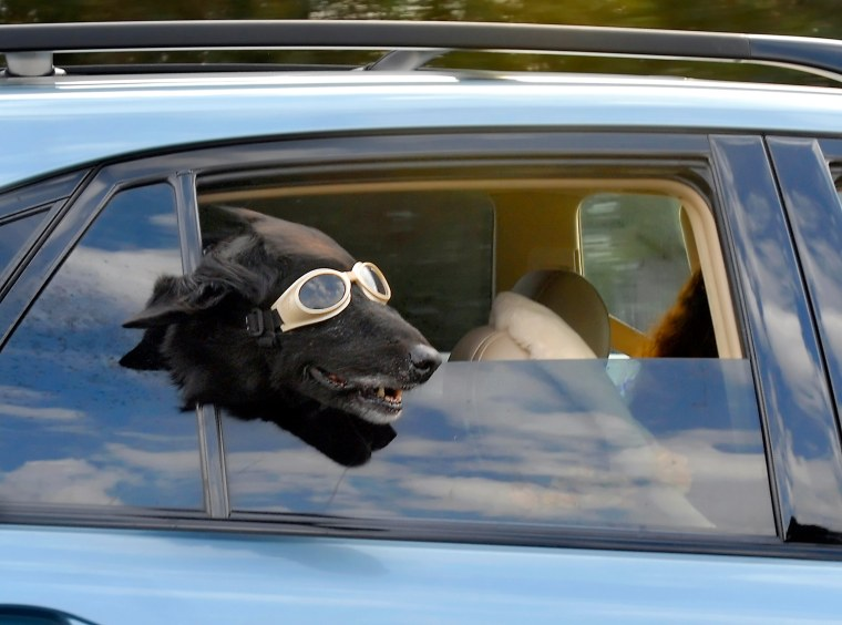 Image: Doggles