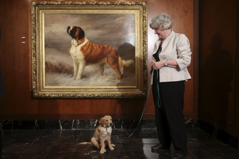 Image: A woman poses with golden retriever Flash following a press event for the American Kennel Club to reveal the nation's most popular dog breeds in the Manhattan borough of New York
