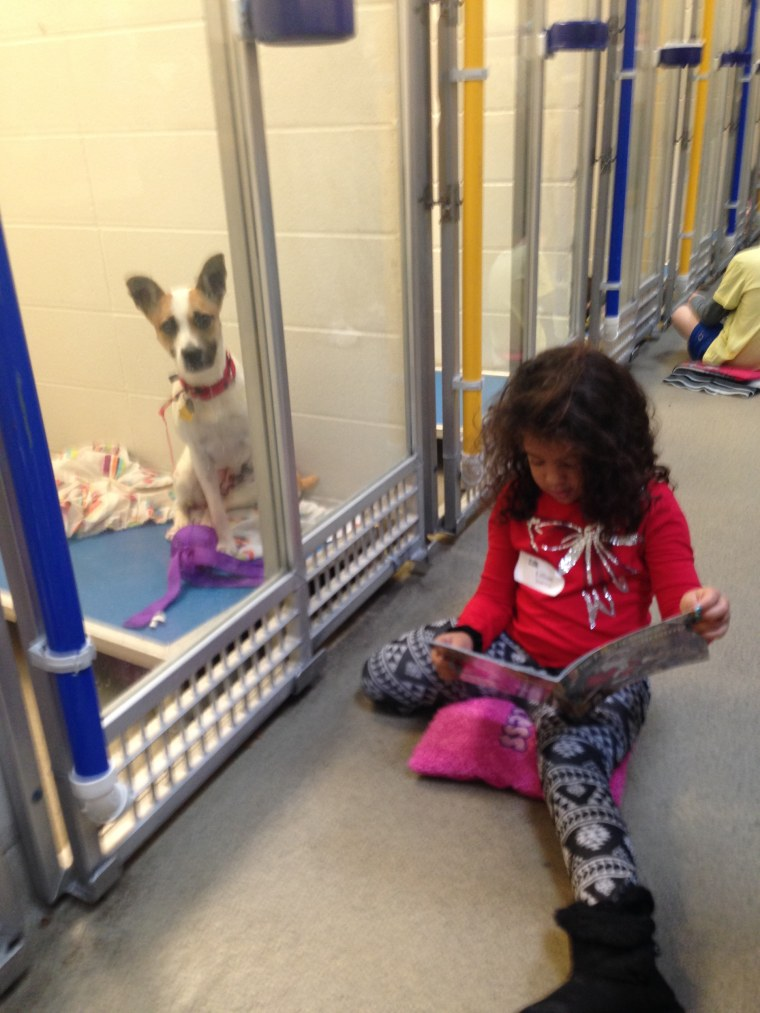 Trained Book Buddies read to the shelter dogs, helping them gain confidence and comfort with visitors.