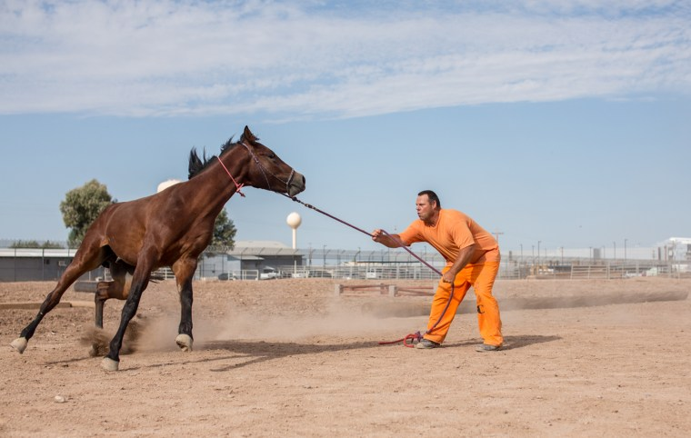Image: Prisoners train horses used by Border Patrol agents Brian Tierce