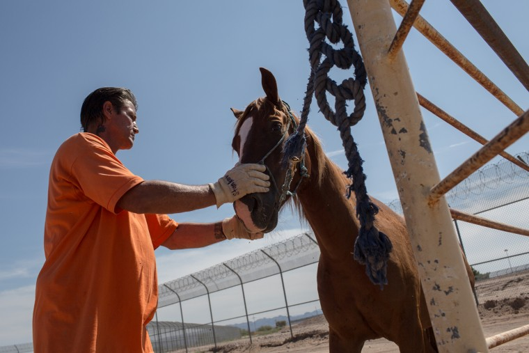 Image: Prisoners train horses used by Border Patrol agents
