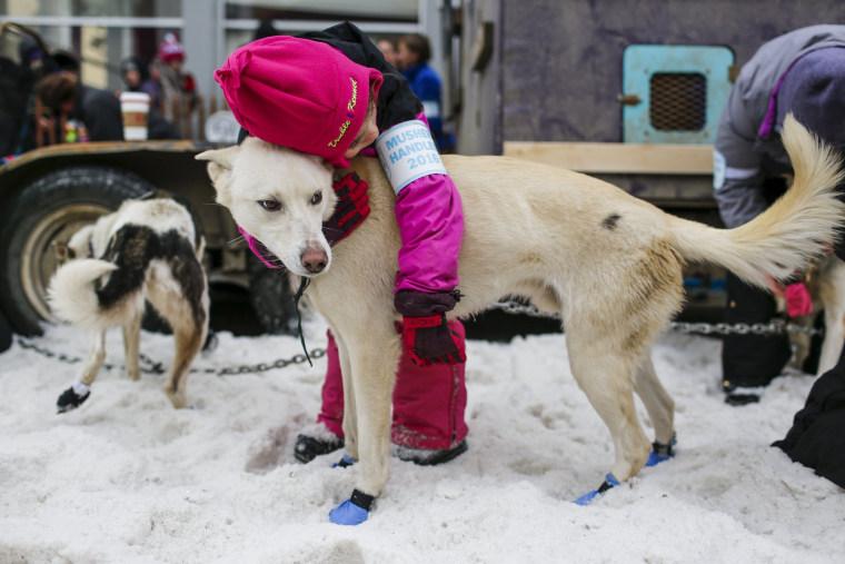 Image: Iditarod Trail Sled Dog Race 01