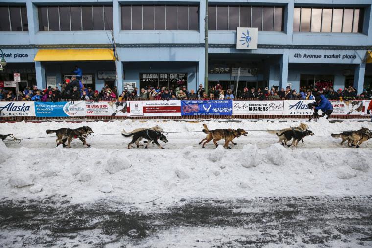 Image: Iditarod Trail Sled Dog Race 04