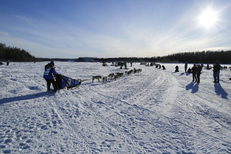 Image: Iditarod Trail Sled Dog Race 09